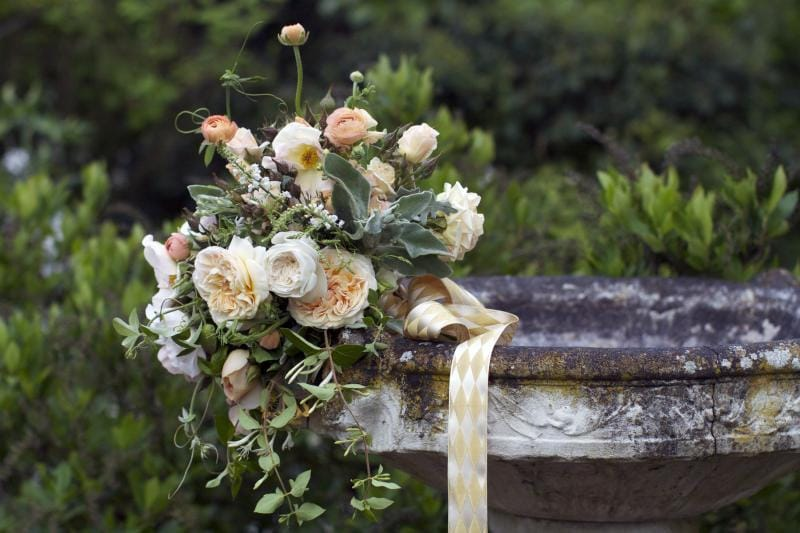 Rose Sweet Juliet photo