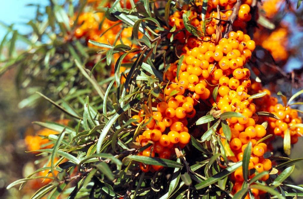 Ландшафт в цветах: оранжевый, желтый, черный, серый, светло-серый. Ландшафт в стиле минимализм.