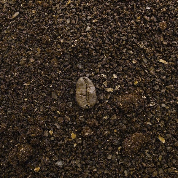 coffee bean on the ground