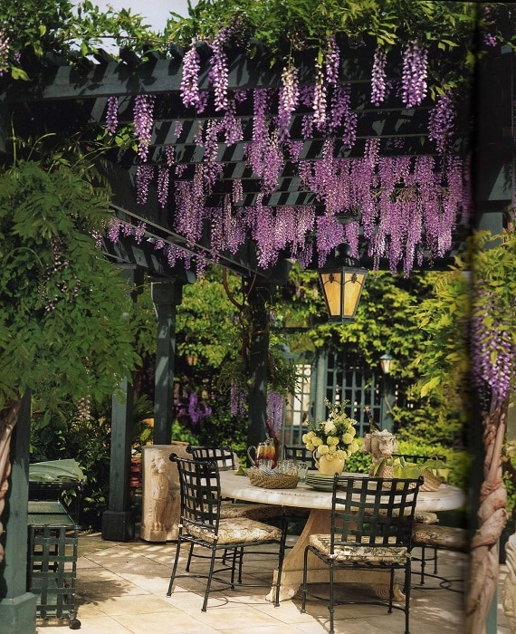 The wooden structures of the pergolas are especially underlined by the wisteria that adorn the arbor.