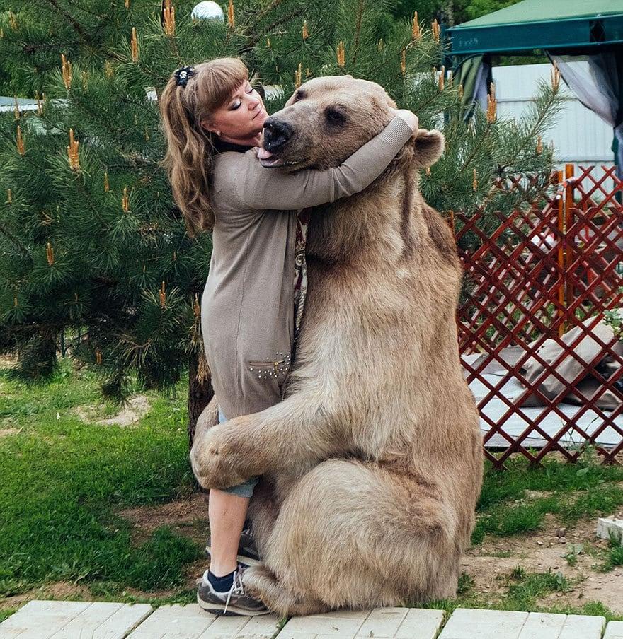 приняла медведица-русский-семья-Stepan-A13