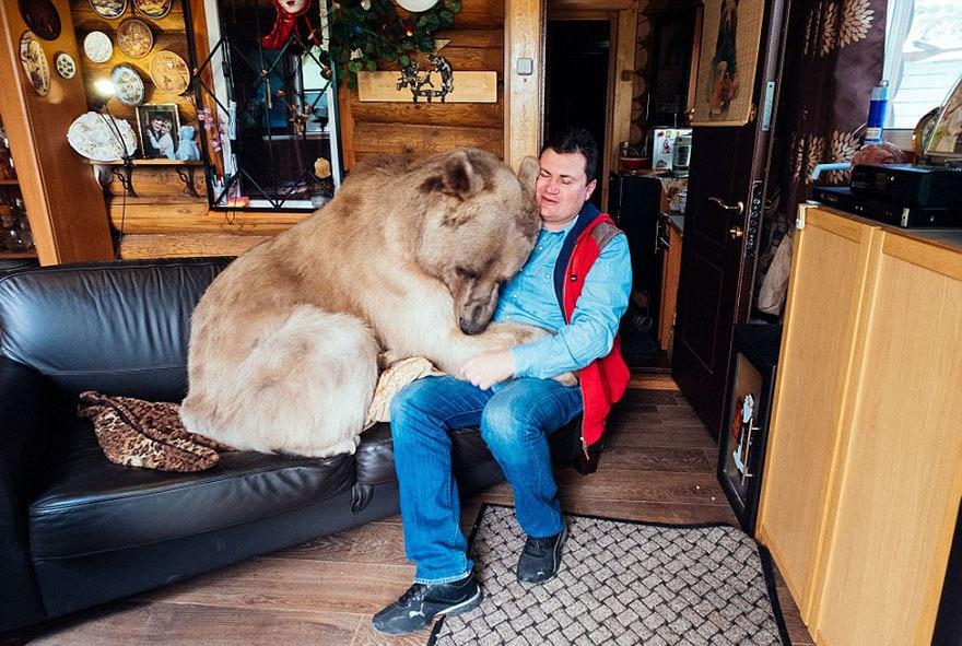 приняла медведица-русский-семья-Stepan-A15
