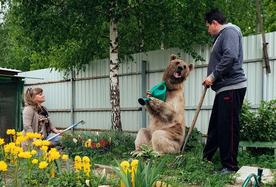 приняла медведица-русский-семья-Stepan-A16