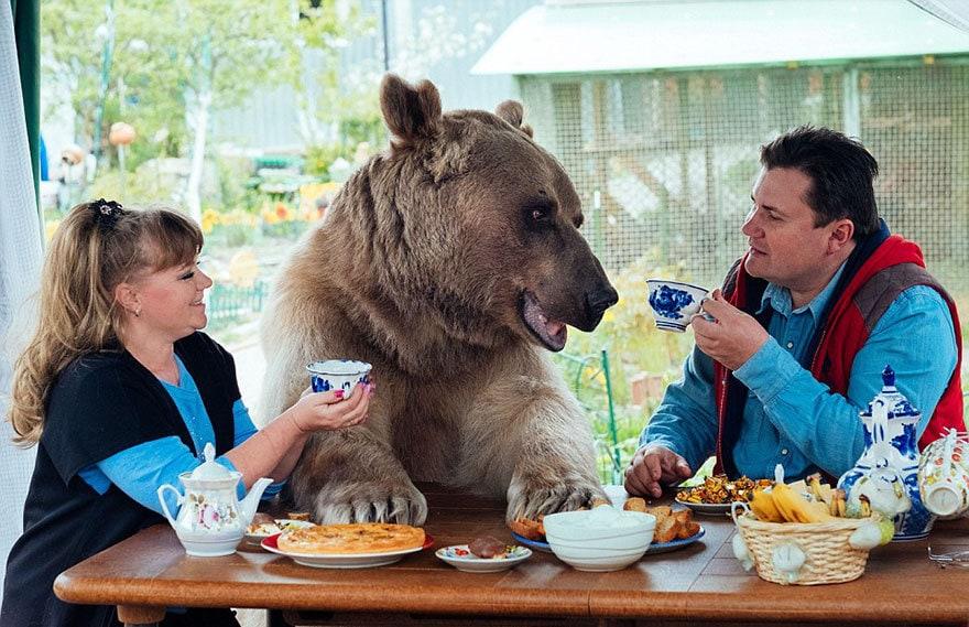приняла медведица-русский-семья-Stepan-A20