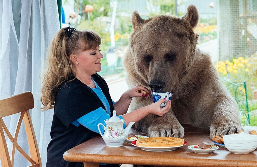 приняла медведица-русский-семья-Stepan-a3