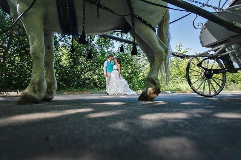Из под коня свадьба, фото, юмор