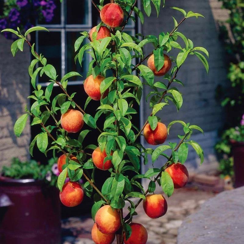 Ландшафт в цветах: оранжевый, черный, серый, светло-серый, темно-зеленый. Ландшафт в стиле минимализм.