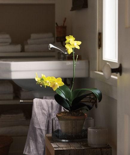 Photography: Floristics in style, Interior decor, Decor, Tips - photos on InMyRoom.ru