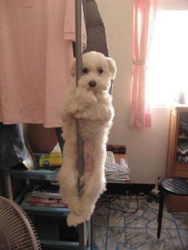 нет собаки-нет ожидающего-duennos-010