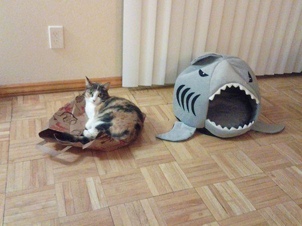 Подарочные кошки-017