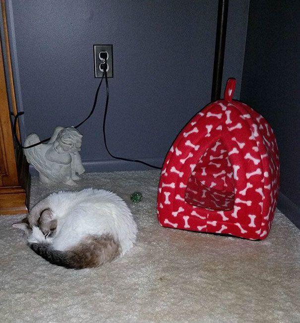 Подарочные кошки-022