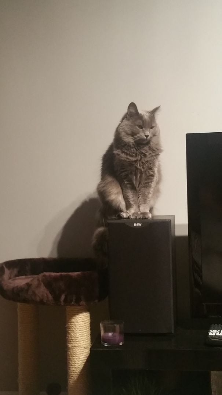 Подарочные кошки-027