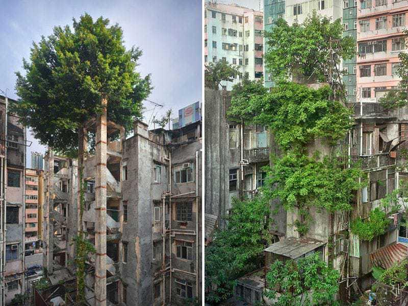 2. Зелень осваивает новую территорию среди жилых массивов Гонконга.