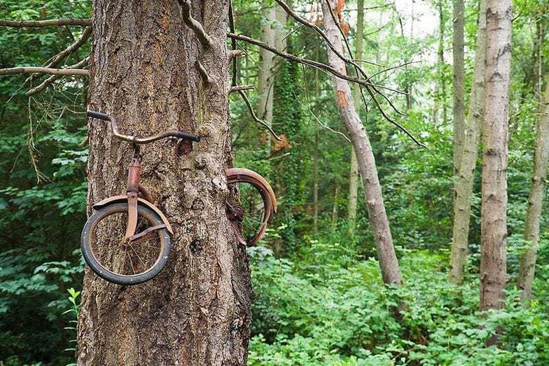 3. Детский велосипед стал обедом для дерева на острове Вашон, Вашингтон, США.
