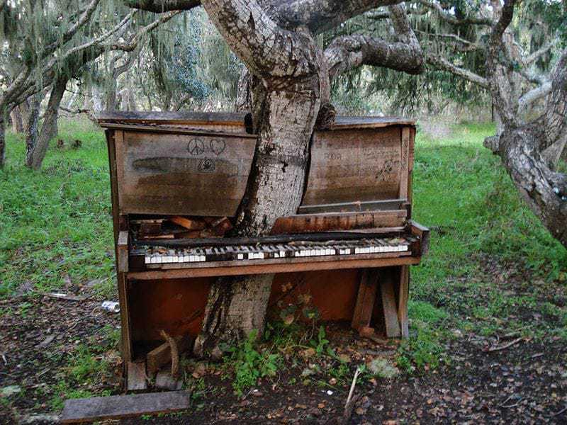 1. Дерево проросло сквозь старое пианино, Калифорния.
