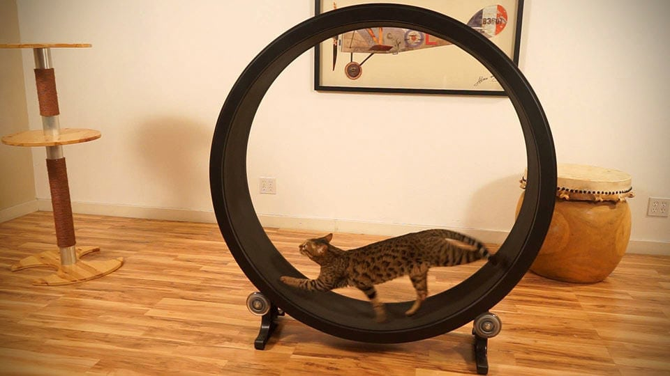 one-fast-cat-exercise-wheel-for-cats