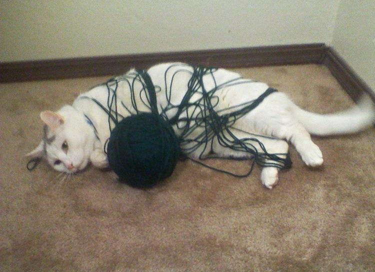 кот запутался в нитках