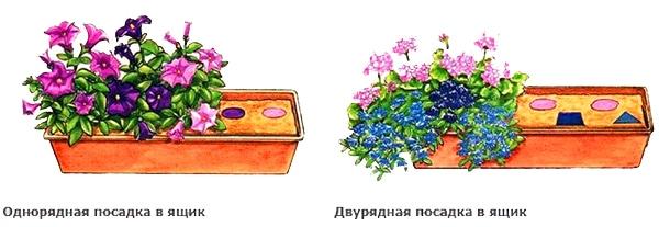 Какие цветы можно выращивать на балконе с южной стороны?