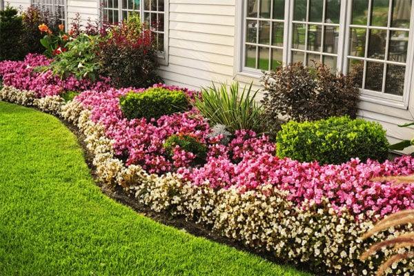 Газонные цветы фото и названия