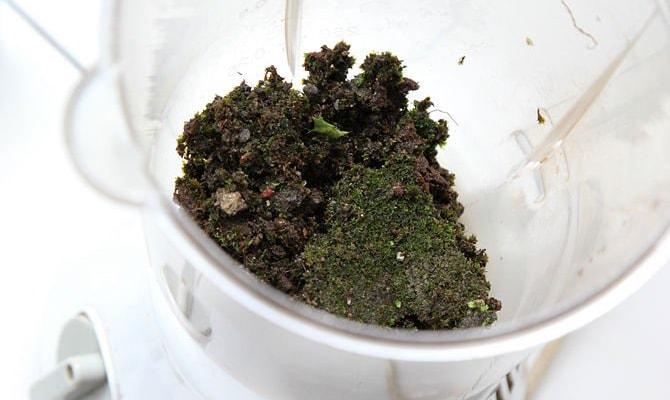 мох в блендере
