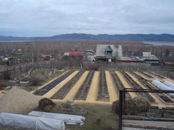 Метод узких грядок раскрываем секреты высокой урожайности