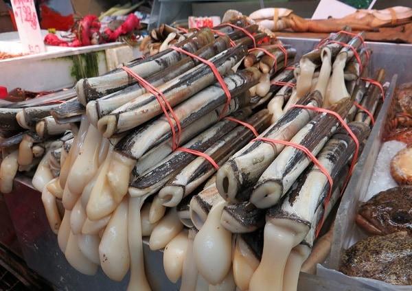 Картинки по запросу моллюск морской черенок