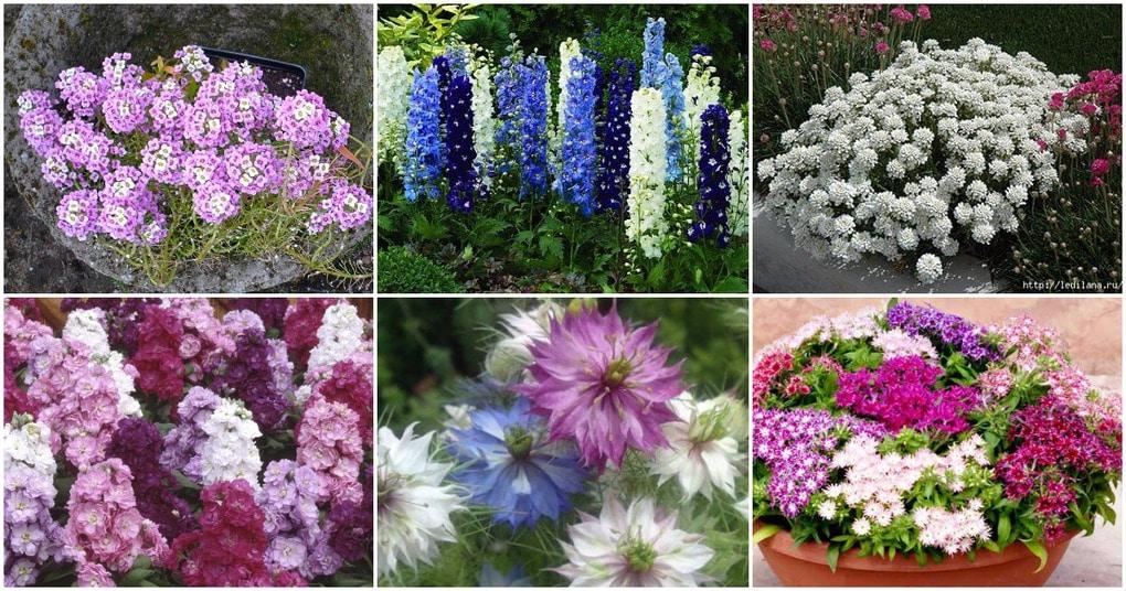 Какие семена цветов можно сажать в зиму 381
