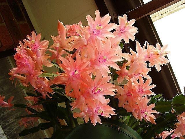 комнатные цветы цвели