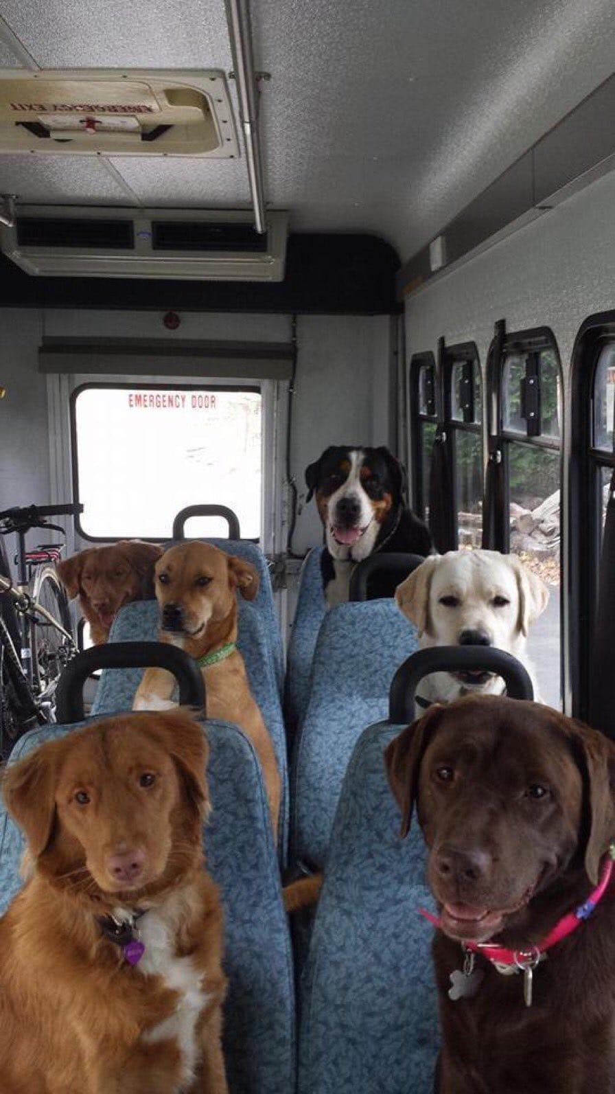 собаки едут в автобусе в школу в Канаде