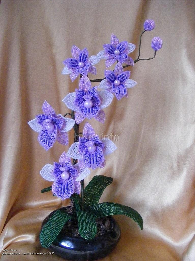 кошек часто плетение орхидеи синей из бисера пошаговые фото плитка идеально