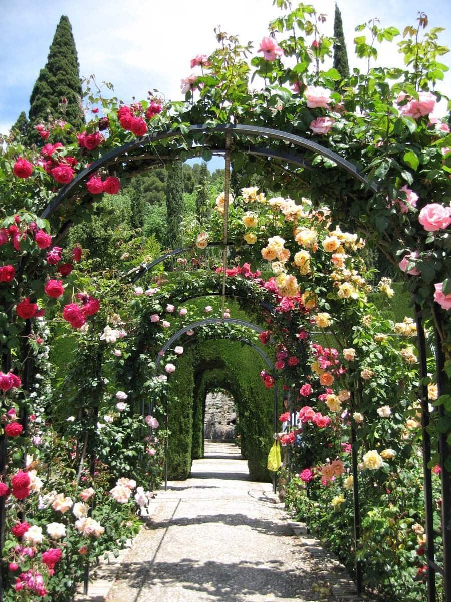 знаменитый сад в Индии