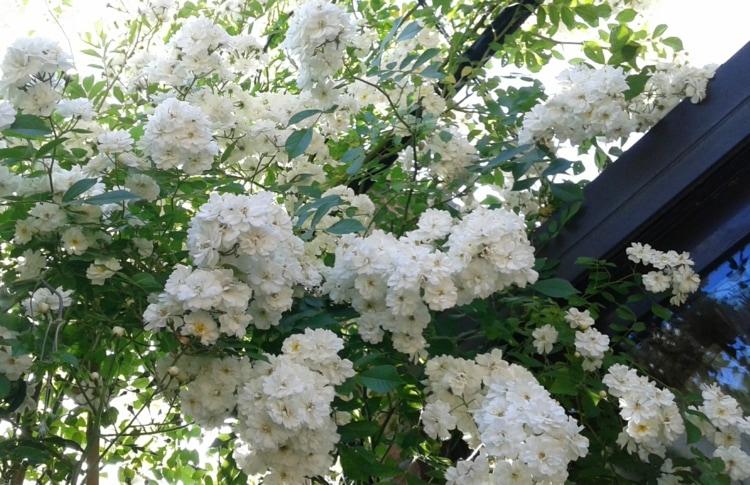 великолепное украшение сада