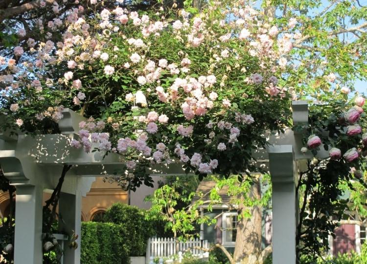 пергола с вьющимися розами