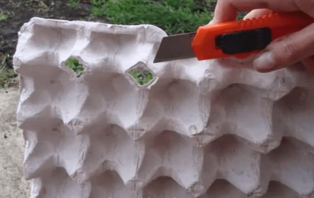 посадка редиса в яичных лотках