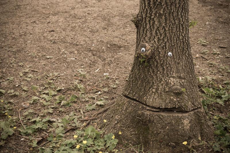 дерево с глазами