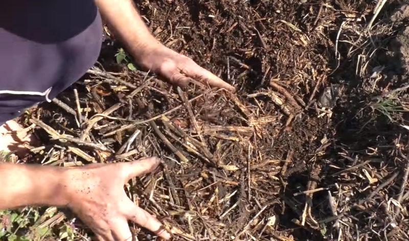 Суперспособ выращивания картофеля для сверхурожая