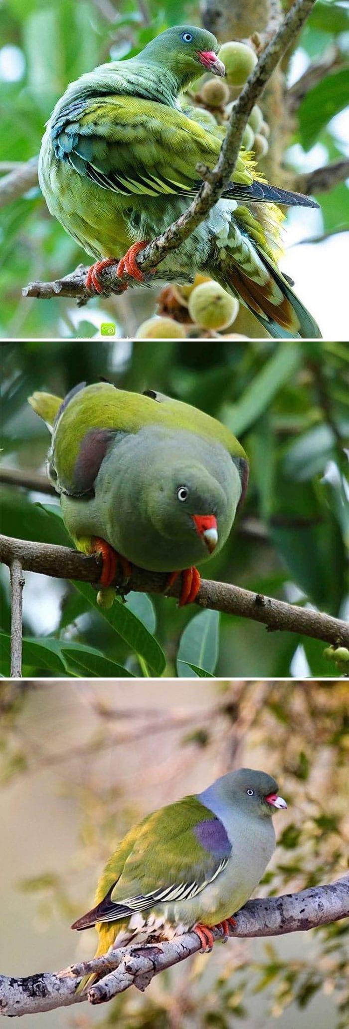 Лесные звери и птицы фото 1591798350_f0b803ee726f368b32659e586319c5c4