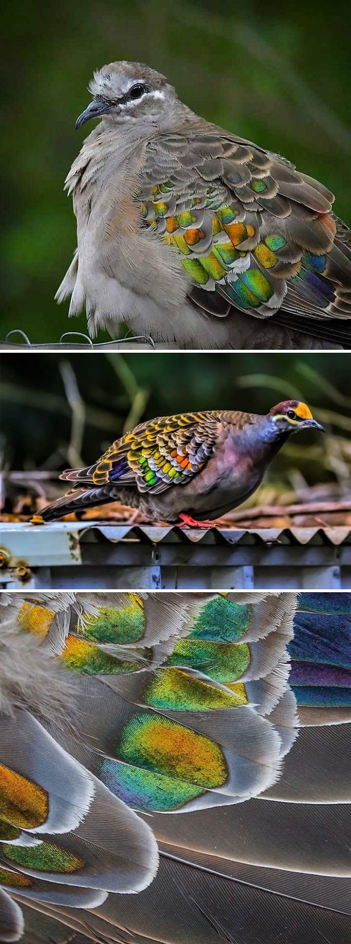 Лесные звери и птицы фото 1591798352_45f78b9f1632e66f139b0fc0309a767e