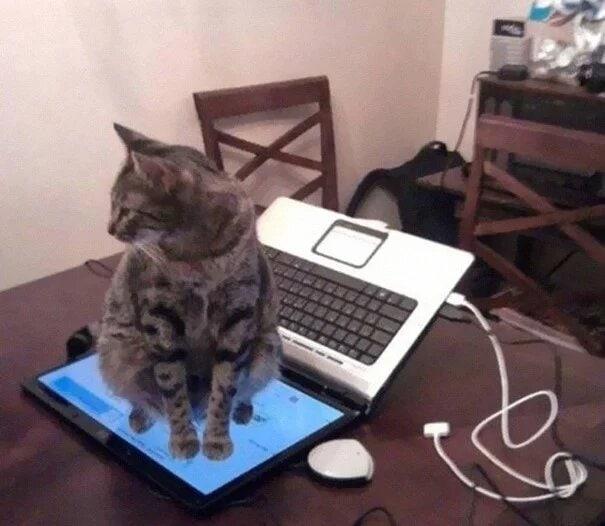 21 доказательство того, что логика кошек за пределами нашего понимания