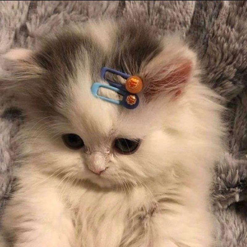 котёнок с заколками