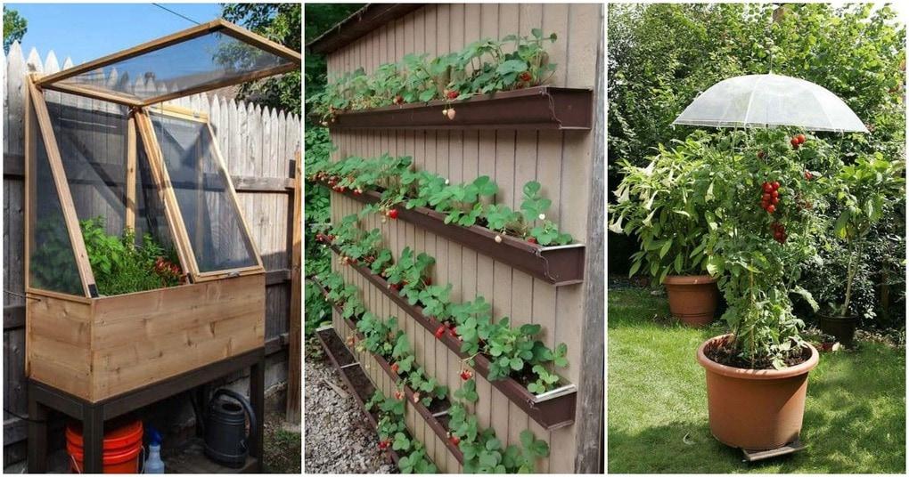 Творческие способы выращивания овощей и фруктов в саду: 25 супер-вдохновляющих идей